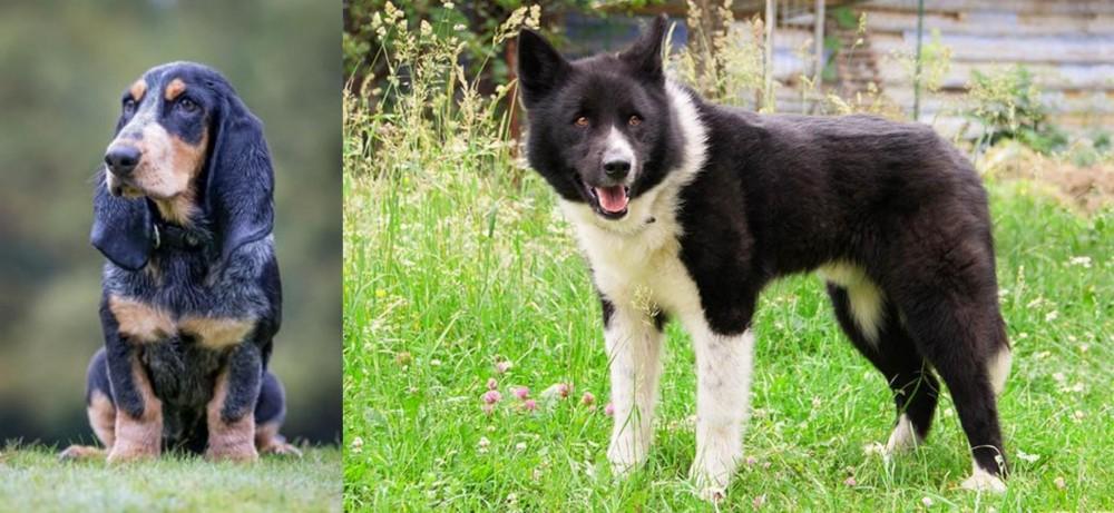 Petit Bleu de Gascogne vs Karelian Bear Dog