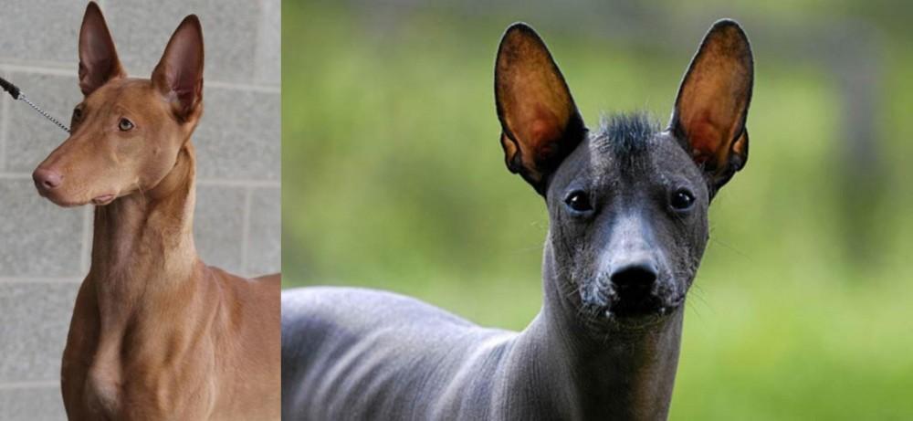 Pharaoh Hound vs Mexican Hairless