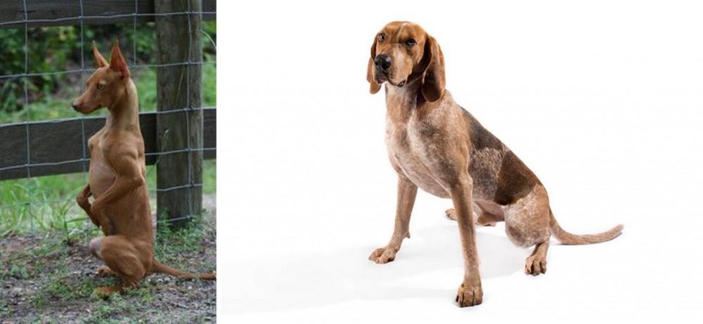 Podenco Andaluz vs English Coonhound