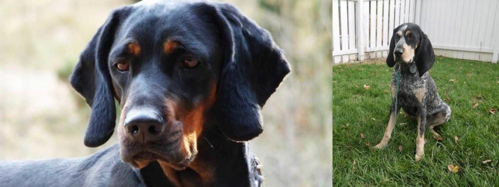Polish Hunting Dog vs Grand Bleu de Gascogne