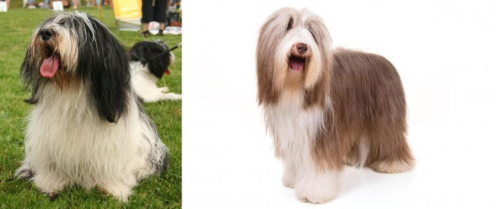 Polish Lowland Sheepdog vs Bearded Collie