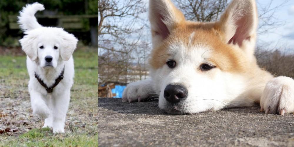 Polish Tatra Sheepdog vs Akita