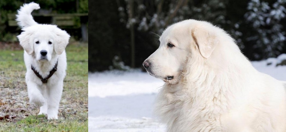 Polish Tatra Sheepdog vs Great Pyrenees