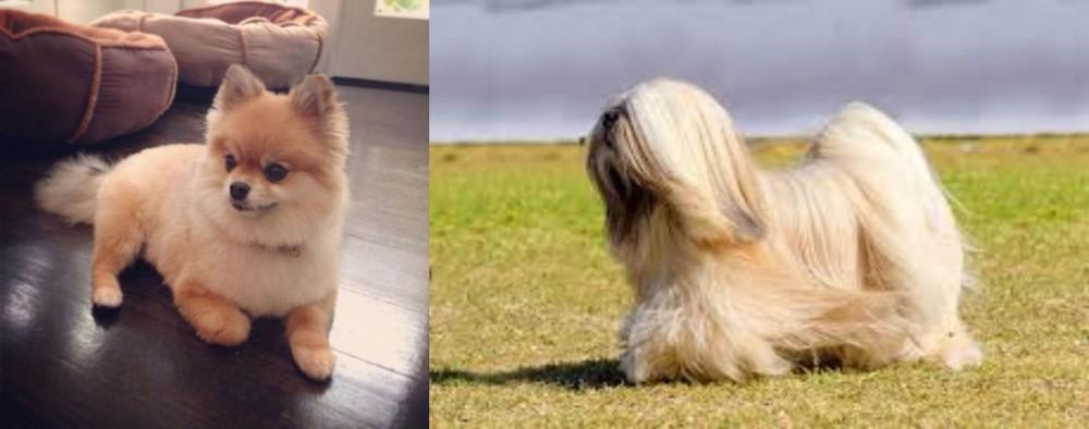 Pomeranian vs Lhasa Apso