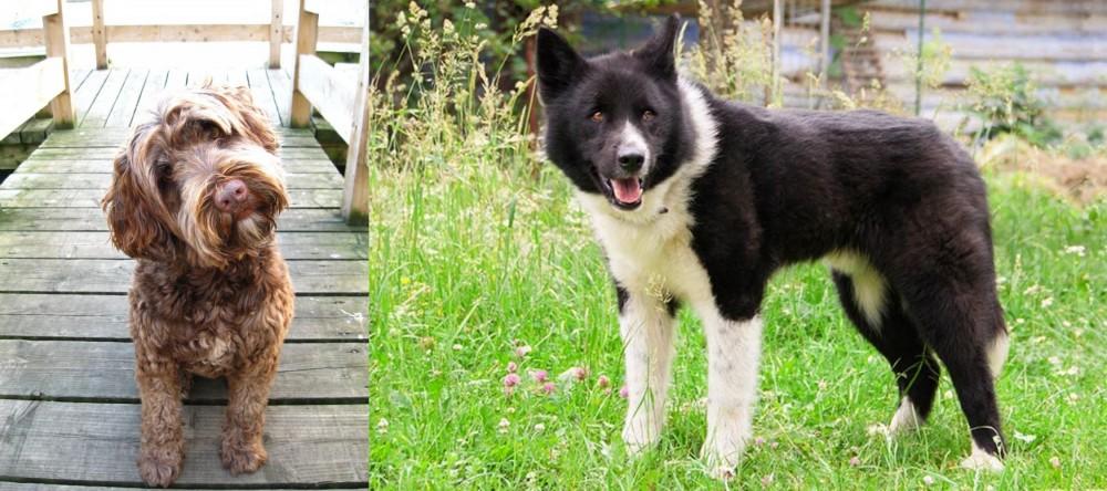 Portuguese Water Dog vs Karelian Bear Dog