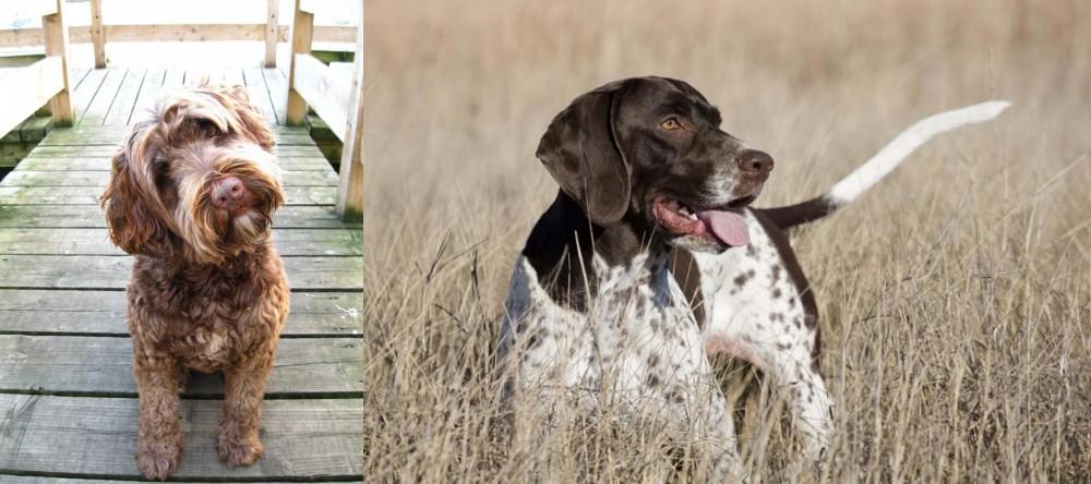 Portuguese Water Dog vs Old Danish Pointer