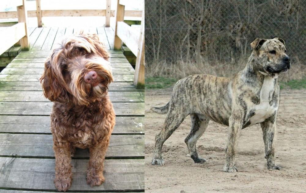 Portuguese Water Dog vs Perro de Presa Mallorquin