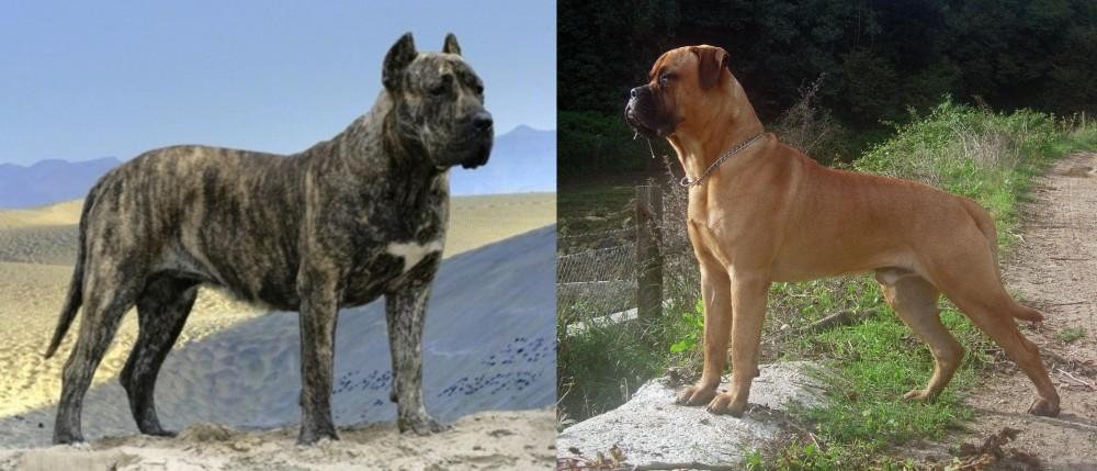 Presa Canario vs Bullmastiff