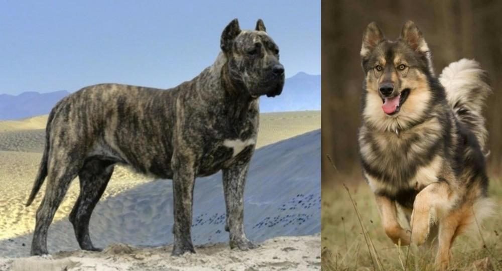 Presa Canario vs Native American Indian Dog