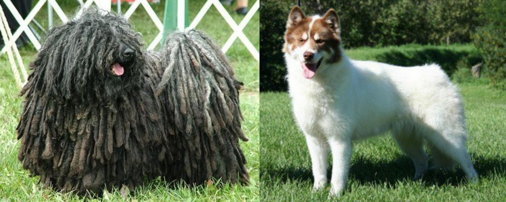 Puli vs Canadian Eskimo Dog