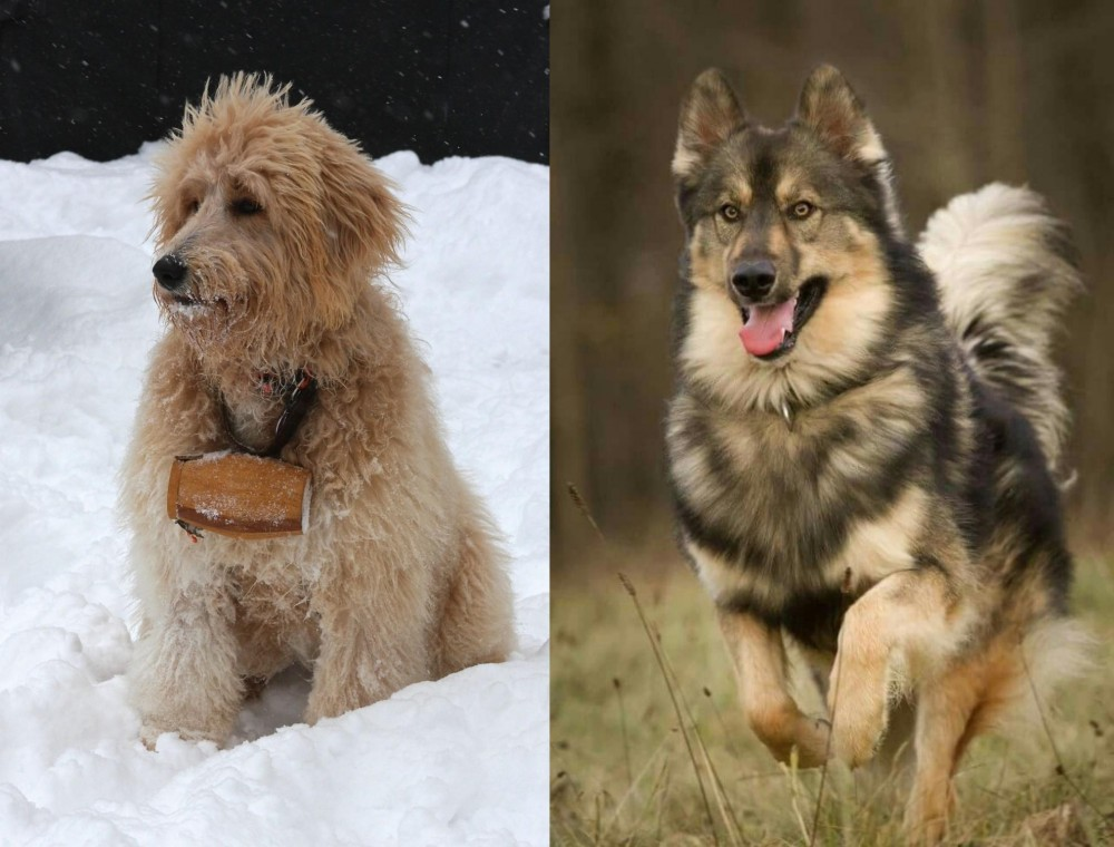 Pyredoodle vs Native American Indian Dog