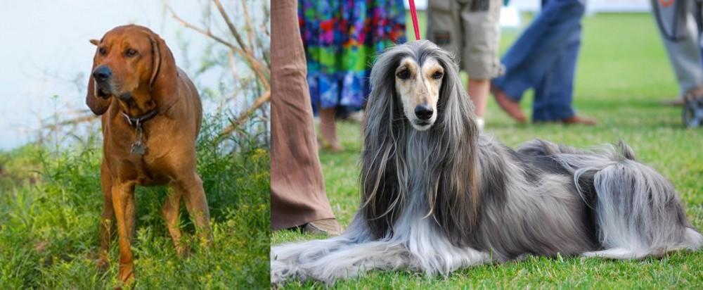 Redbone Coonhound vs Afghan Hound
