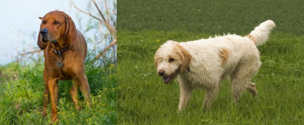 Redbone Coonhound vs Briquet Griffon Vendeen