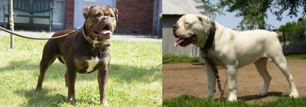 Renascence Bulldogge vs Hermes Bulldogge