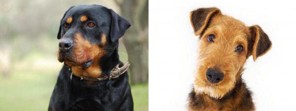 Airedale Terrier vs Rottweiler