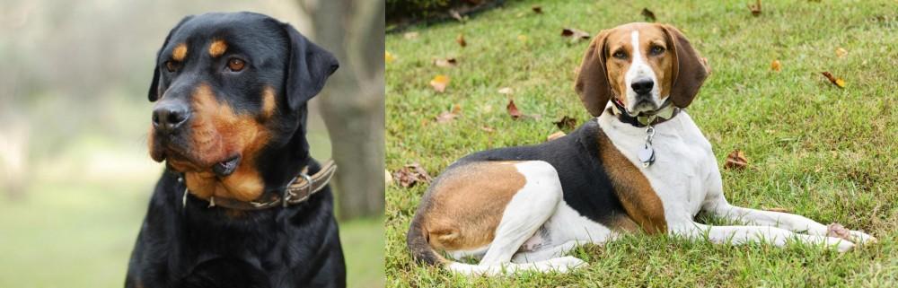 American English Coonhound vs Rottweiler