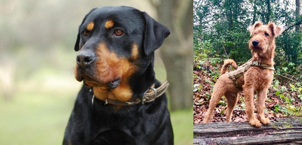 Irish Terrier vs Rottweiler