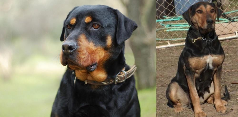 New Zealand Huntaway vs Rottweiler