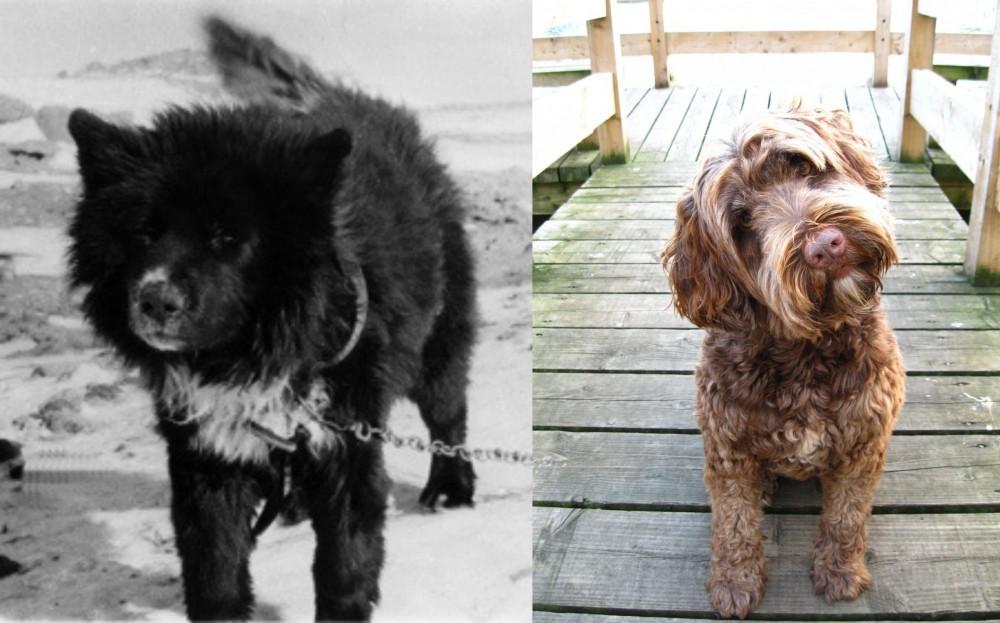 Sakhalin Husky vs Portuguese Water Dog