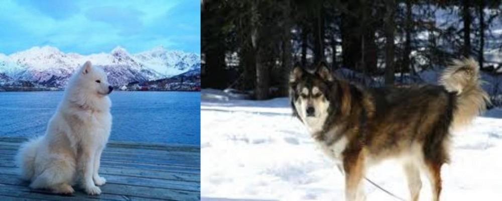 Samoyed vs Mackenzie River Husky