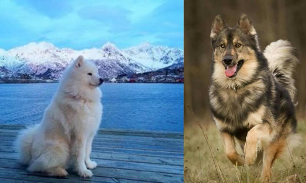 Samoyed vs Native American Indian Dog