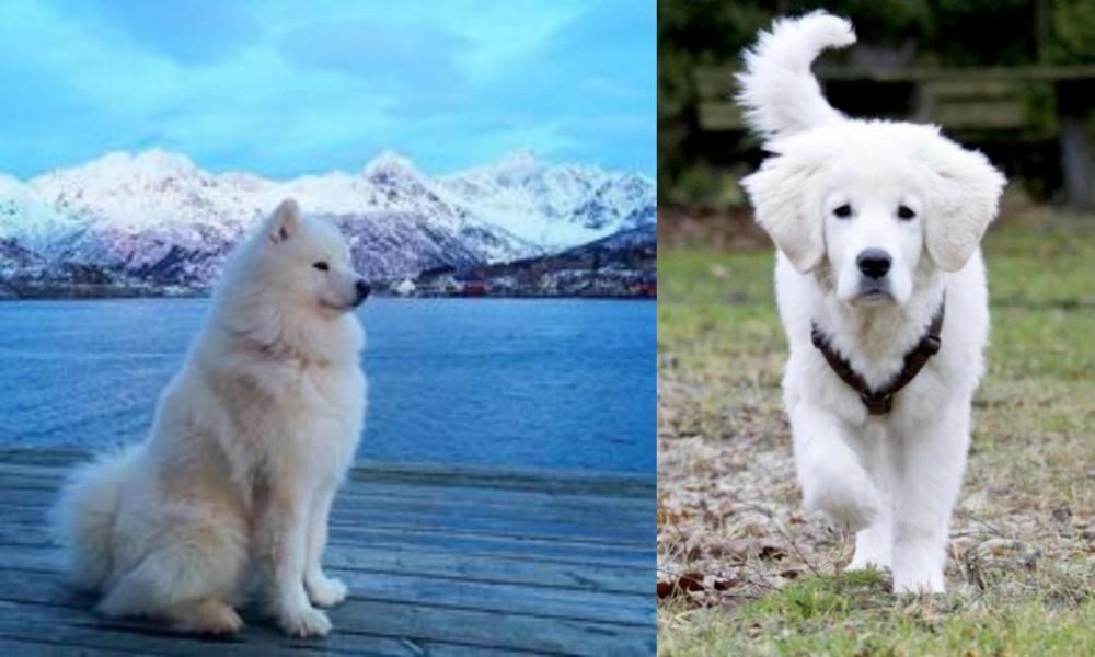 Samoyed vs Polish Tatra Sheepdog