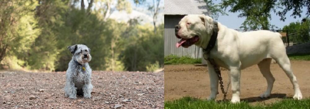 Schnoodle vs Hermes Bulldogge