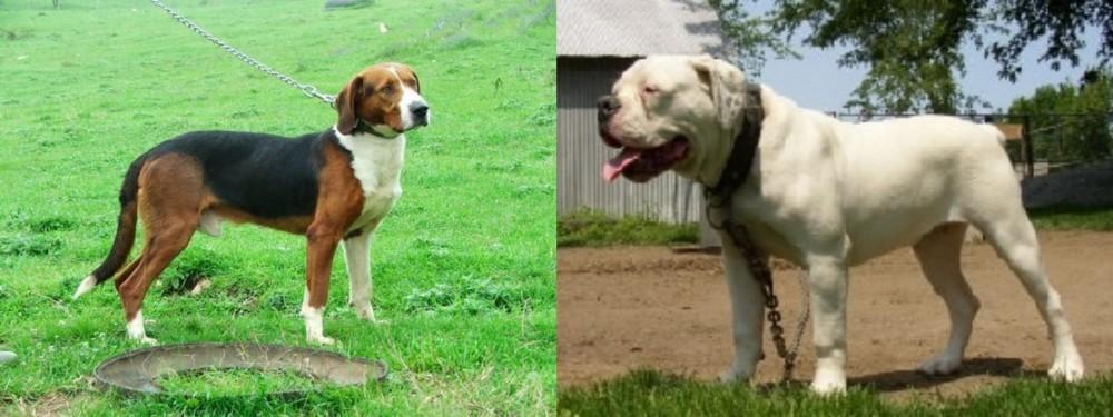 Serbian Tricolour Hound vs Hermes Bulldogge
