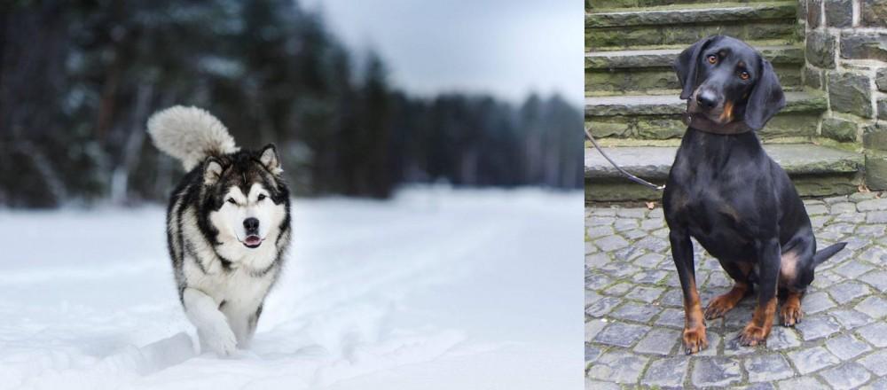 Austrian Black and Tan Hound vs Siberian Husky