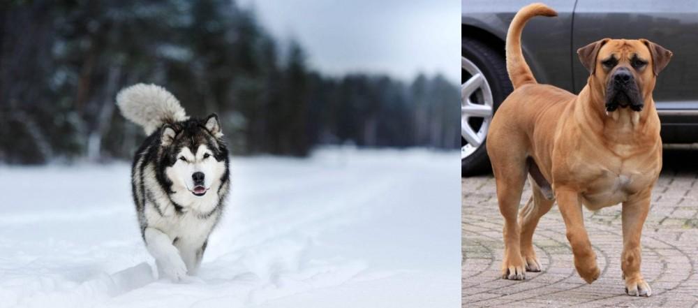 Boerboel vs Siberian Husky