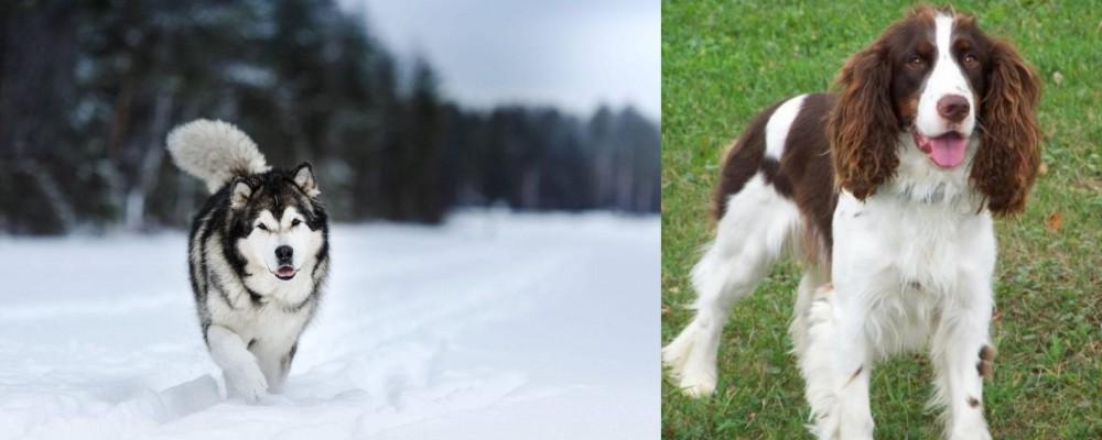 English Springer Spaniel vs Siberian Husky