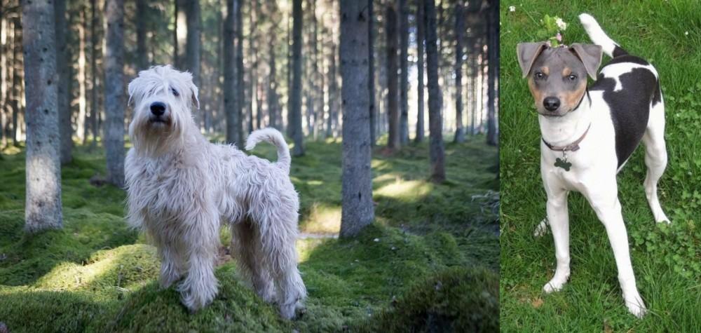 Soft-Coated Wheaten Terrier vs Brazilian Terrier