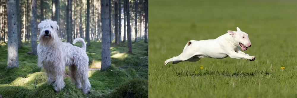 Soft-Coated Wheaten Terrier vs Bull Terrier