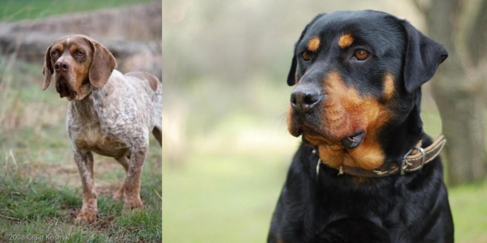 Spanish Pointer vs Rottweiler