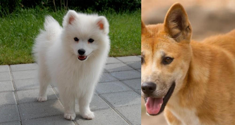 Spitz vs Dingo