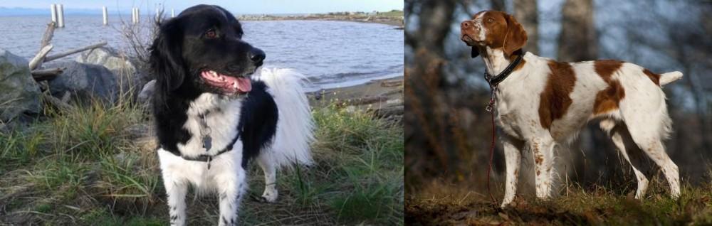 Stabyhoun vs Brittany
