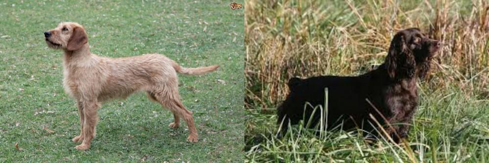 Styrian Coarse Haired Hound vs Boykin Spaniel