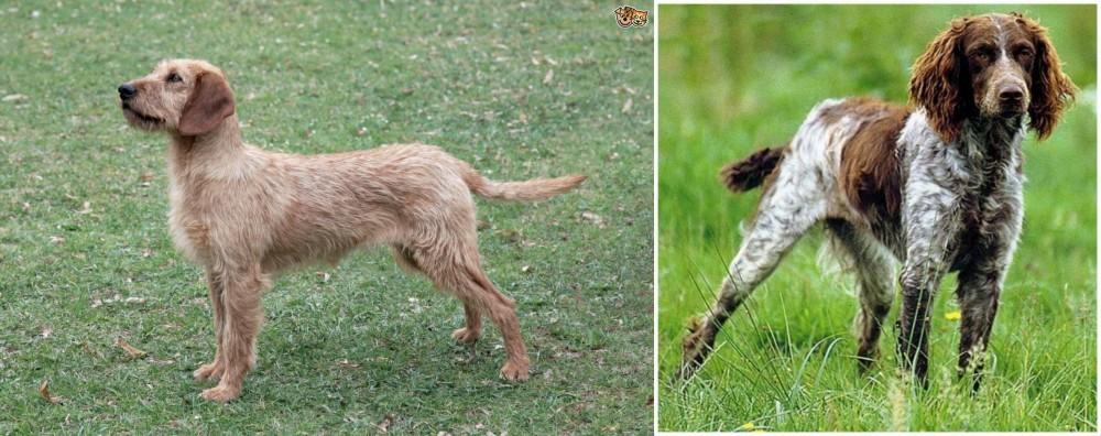 Styrian Coarse Haired Hound vs Pont-Audemer Spaniel