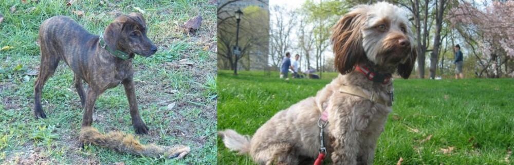 Treeing Cur vs Doxiepoo