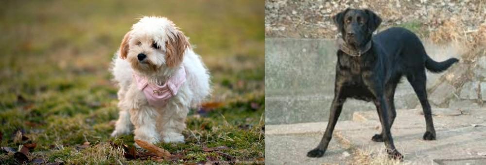 Cao de Castro Laboreiro vs West Highland White Terrier