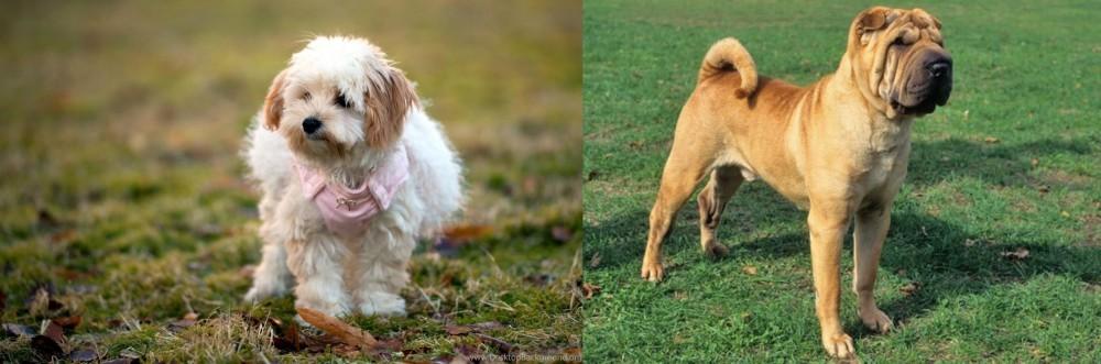 Chinese Shar Pei vs West Highland White Terrier