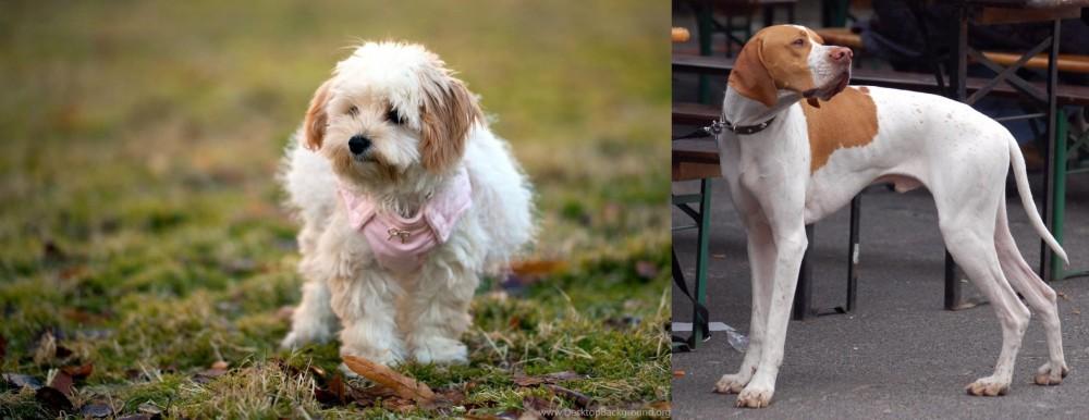 English Pointer vs West Highland White Terrier