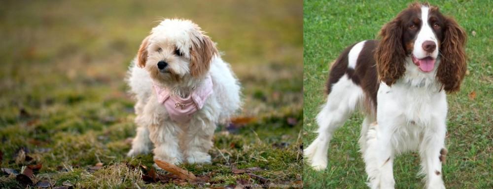 English Springer Spaniel vs West Highland White Terrier