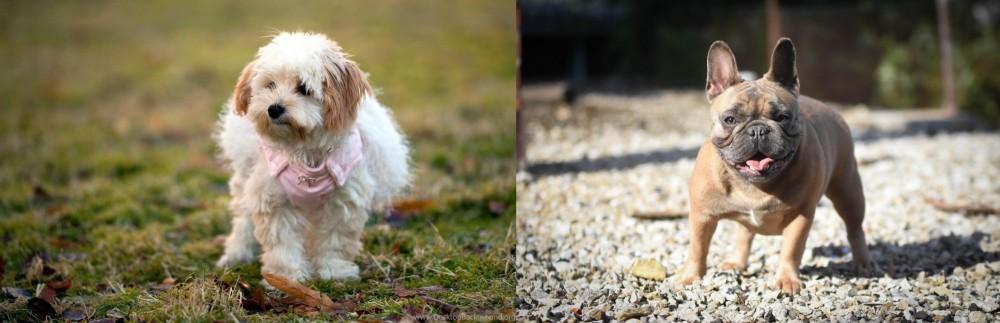 French Bulldog vs West Highland White Terrier