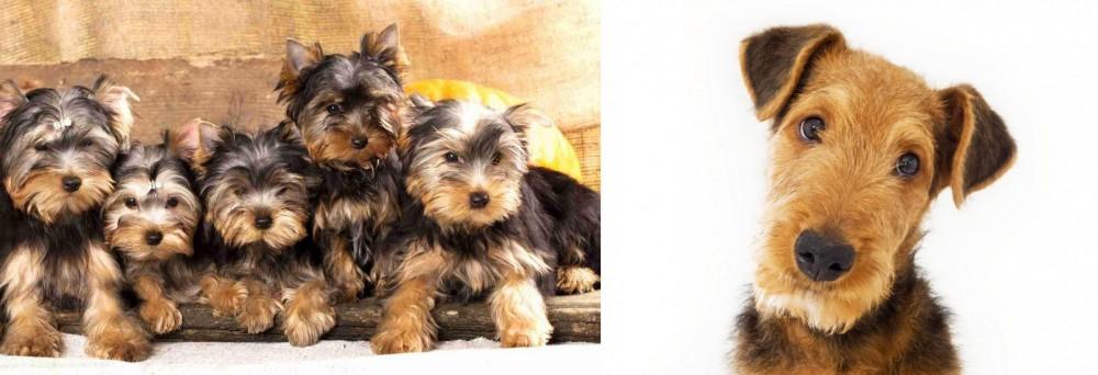 Airedale Terrier vs Yorkshire Terrier