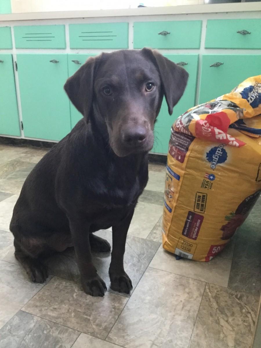 Puppies For Sale in Rhode Island (396)   Petzlover