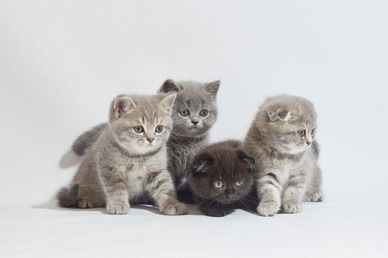 kittens for sale richmond va