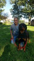 Abruzzenhund Puppies for sale in Cincinnati, OH, USA. price: NA