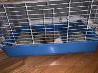 Abyssinian Guinea Pig Rodents for sale in Forest Park, IL, USA. price: NA