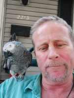 African Grey Parrot Birds for sale in Pekin, IL, USA. price: NA